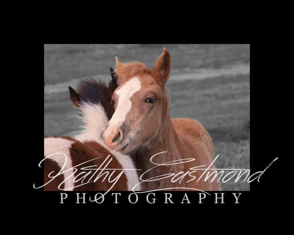 """Colts"" 5x7 print mounted on a black 8x10 acid-free matte for $20 with free shipping within the U.S.  (Kathy Eastmond's signature will replace the copyright  logo )"