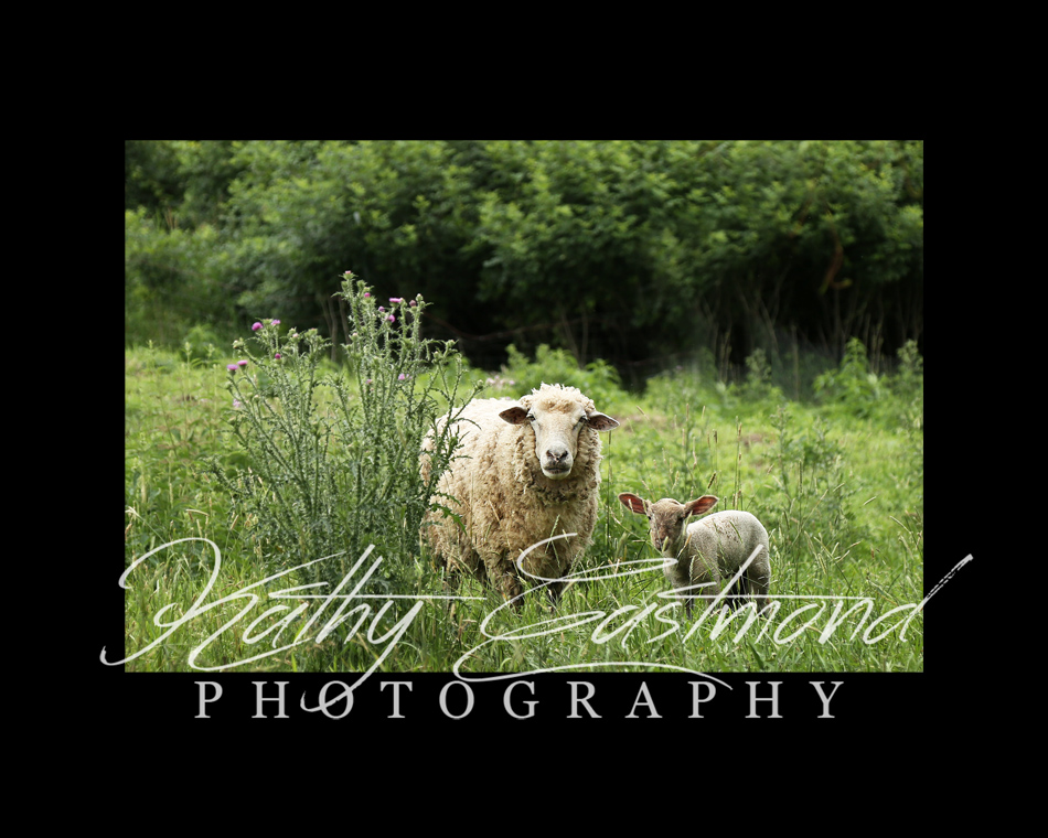 """Lizzy And Her Lamb"" 5x7 print mounted on a black 8x10 acid-free matte for $20 with free shipping within the U.S.  (Kathy Eastmond's signature will replace the copyright logo)"