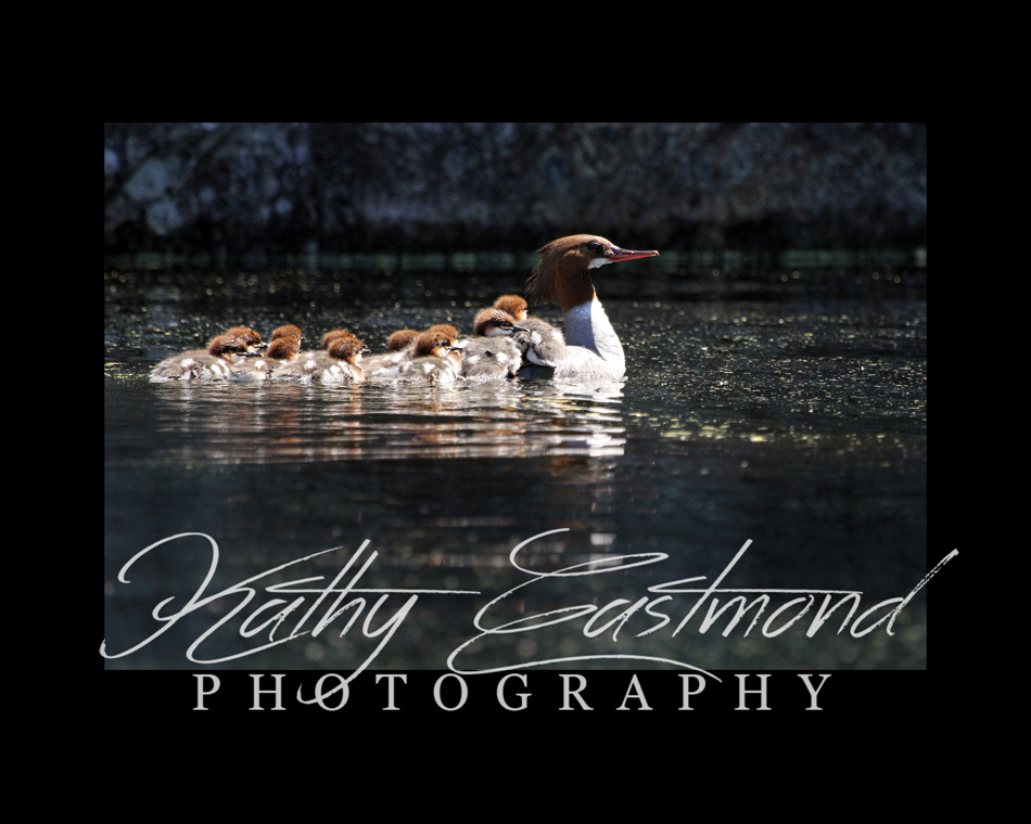 """Morganza Ducks"" 5x7 print mounted on a black 8x10 acid-free matte for $20 with free shipping within the U.S.  (Kathy Eastmond's signature will replace the copyright  logo )"
