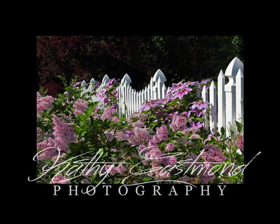 """Summer Garden"" 5x7 print mounted on a black 8x10 acid-free matte for $20 with free shipping within the U.S.  (Kathy Eastmond's signature will replace the copyright  logo )"