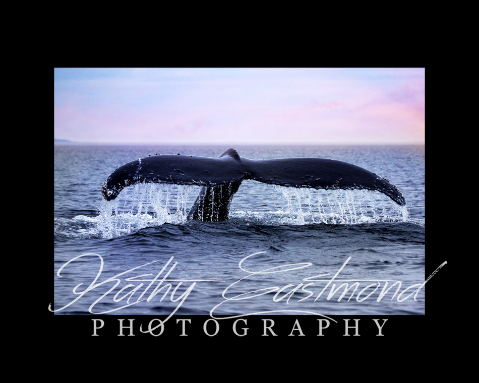 """Humpback"" 5x7 print mounted on a black 8x10 acid-free matte for $20 with free shipping within the U.S.  (Kathy Eastmond's signature will replace the copyright  logo )"