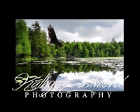 """Eagle on Saranac Lake""  5x7 print mounted on a black 8x10 acid-free matte for $20 with free shipping within the U.S.  (Kathy Eastmond's signature will replace the copyright  logo )"
