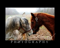 """Horse Talk"" 5x7 print mounted on a black 8x10 acid-free matte for $20 with free shipping within the U.S.  (Kathy Eastmond's signature will replace the copyright  logo )"