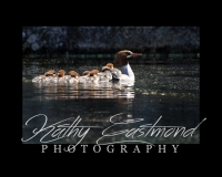 """""""Morganza Ducks"""" 5x7 print mounted on a black 8x10 acid-free matte for $20 with free shipping within the U.S.  (Kathy Eastmond's signature will replace the copyright  logo )"""