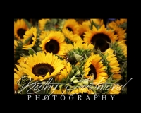 """Sweet Sunflowers"" 5x7 print mounted on a black 8x10 acid-free matte for $20 with free shipping within the U.S.  (Kathy Eastmond's signature will replace the copyright logo)"