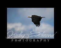 """Soaring Eagle"" 5x7 print mounted on a black 8x10 acid-free matte for $20 with free shipping within the U.S.  (Kathy Eastmond's signature will replace the copyright logo)"