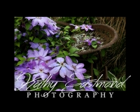 """Purple Clematis"" 5x7 print mounted on a black 8x10 acid-free matte for $20 with free shipping within the U.S.  (Kathy Eastmond's signature will replace the copyright logo)"