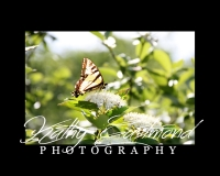 """""""Butterfly on Saranac Lake"""" 5x7 print mounted on a black 8x10 acid-free matte for $20 with free shipping within the U.S.  (Kathy Eastmond's signature will replace the copyright logo)"""